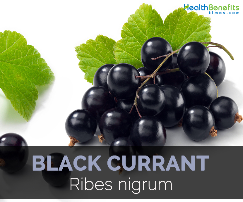 Black Currant Quick Facts