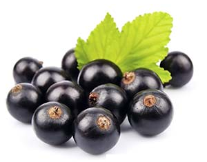 Health benefits of Black currants
