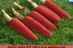 Health benefits of Red fruit (Buah Merah)