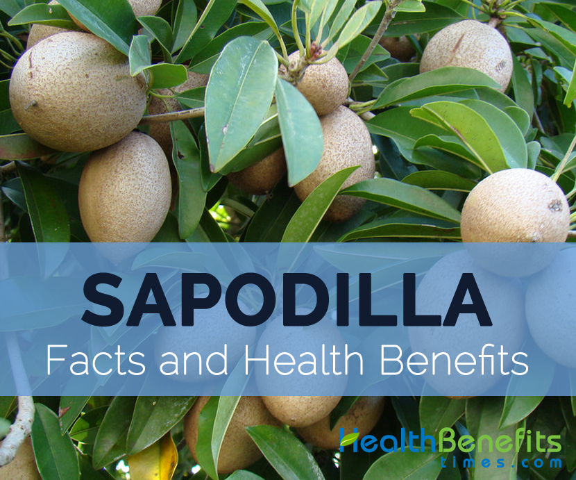 Sapodilla-facts-and-health-benefits