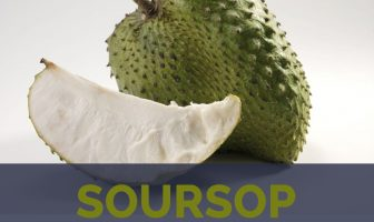 Soursop facts and health benefits