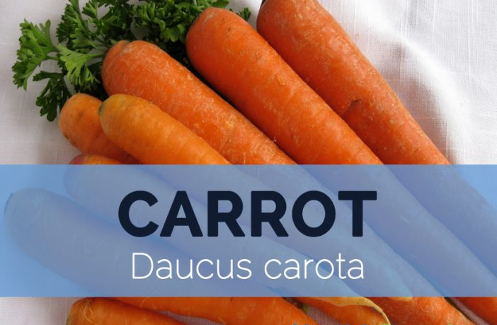 Carrot Nutrition Facts And Health Benefits Hb Times