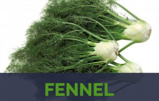 Fennel facts and health benefits