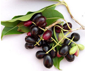 Health Benefits of Eugenia Jambolana