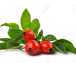 Health benefits of Rose hips