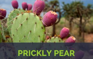 Prickly Pear facts and health benefits