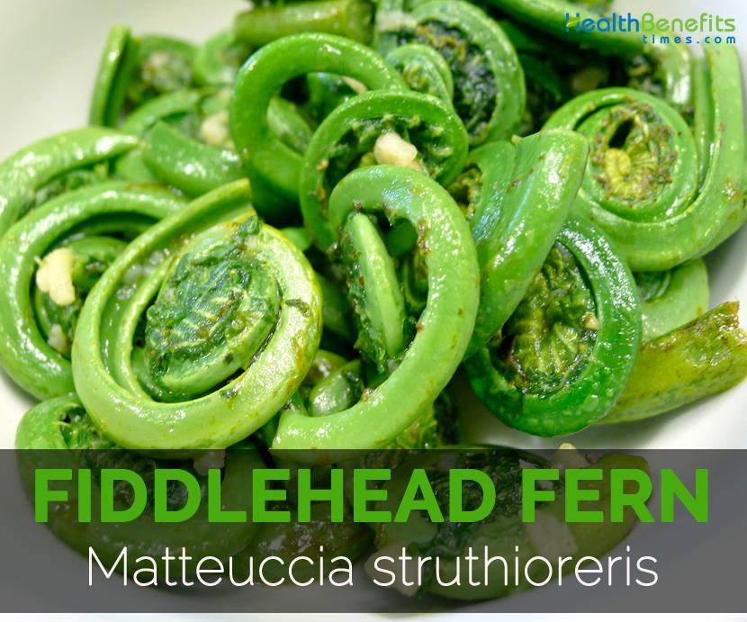 Fiddlehead-fern---Matteuccia-struthioreris