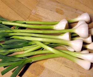 Health benefits of Green Garlic