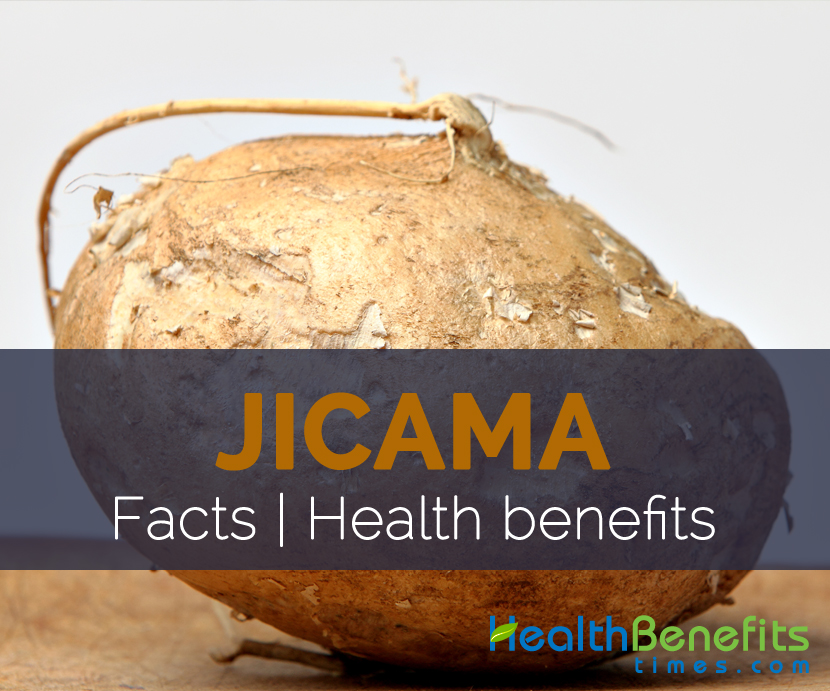 Jicama Facts and Health benefits