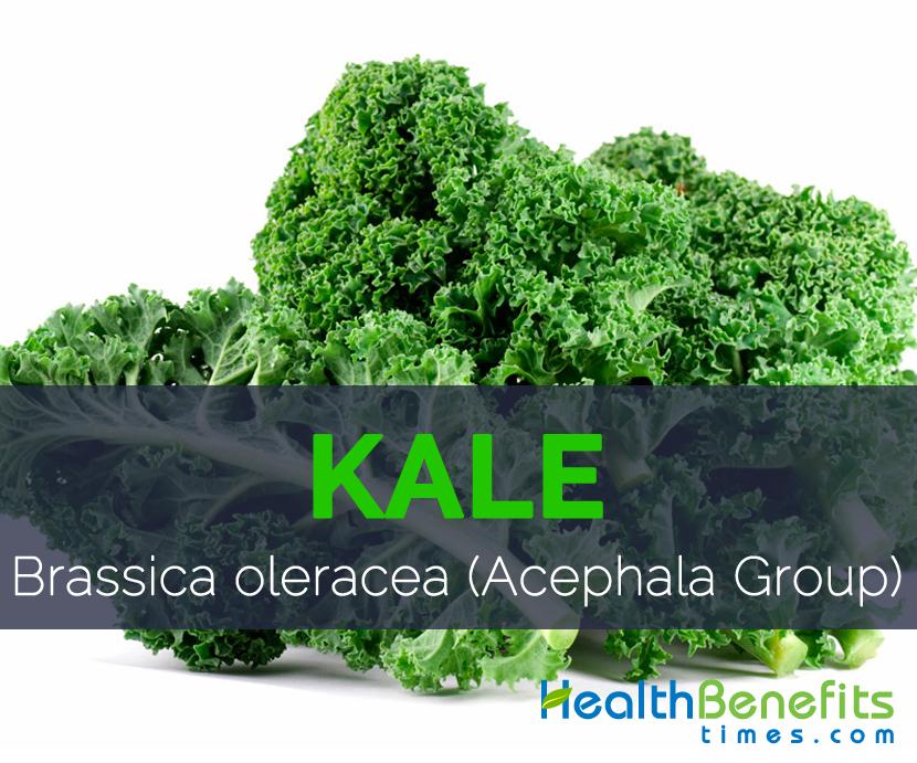 Kale - Brassica oleracea (Acephala Group)