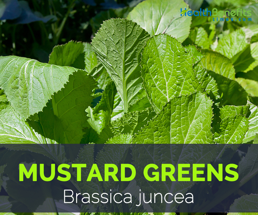Mustard greens - Brassica juncea