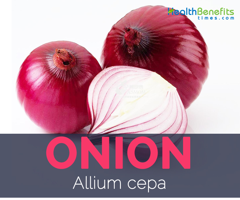 Onion - Allium cepa