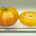 Armenian Tomato