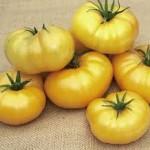Azoychaka Tomato