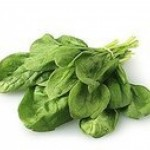 Flat-leaf spinach