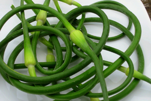 Health benefits of Garlic Scapes
