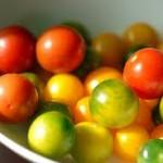 Japanese Tomato