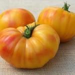 Oxacan Jewel Tomato