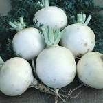 Snow Ball Turnip