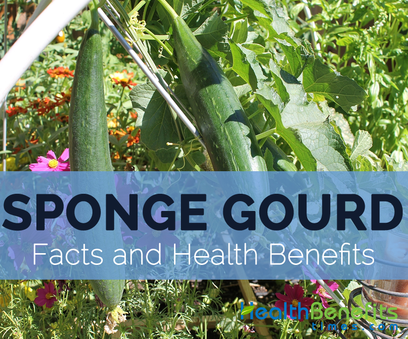 Luffa Facts Health Benefits And Nutritional Value