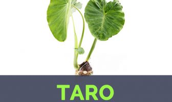 Taro facts and health benefits