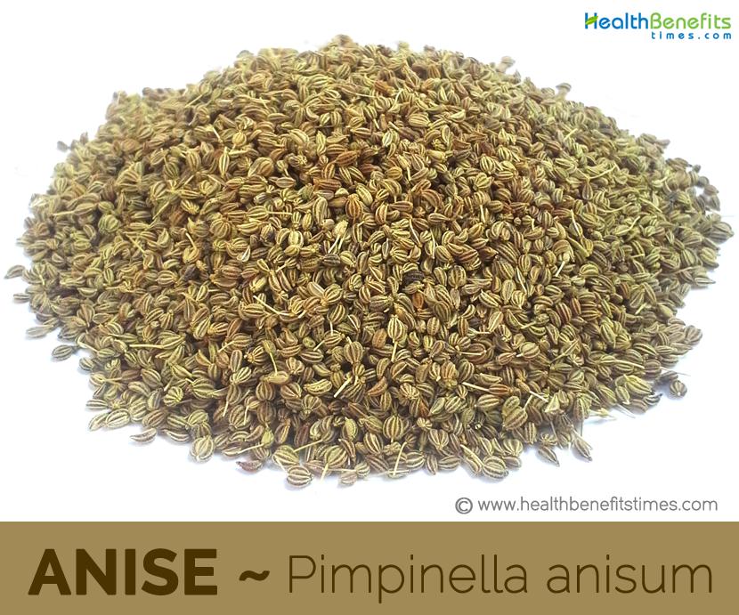 Anise - Pimpinella anisum