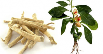 Health-benefits-of-Ashwagandha