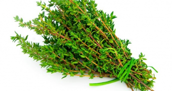 Health benefits of Thyme