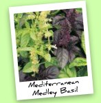 Mediterranean Medley Basil