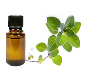 health benefits of oregano essential oil
