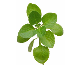health-benefits-of-oregano