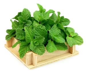 Health Benefits of Mint