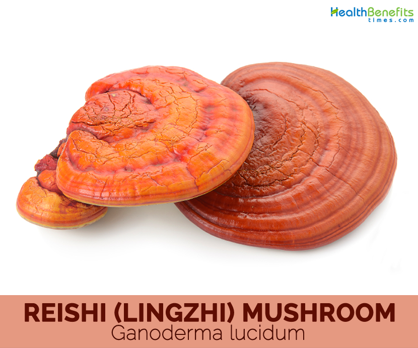 Reishi-Mushroom-Facts-and-health-benefits