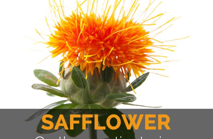 Safflower Facts Health Benefits And Nutritional Value