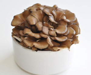 Health Benefits of Maitake Mushrooms