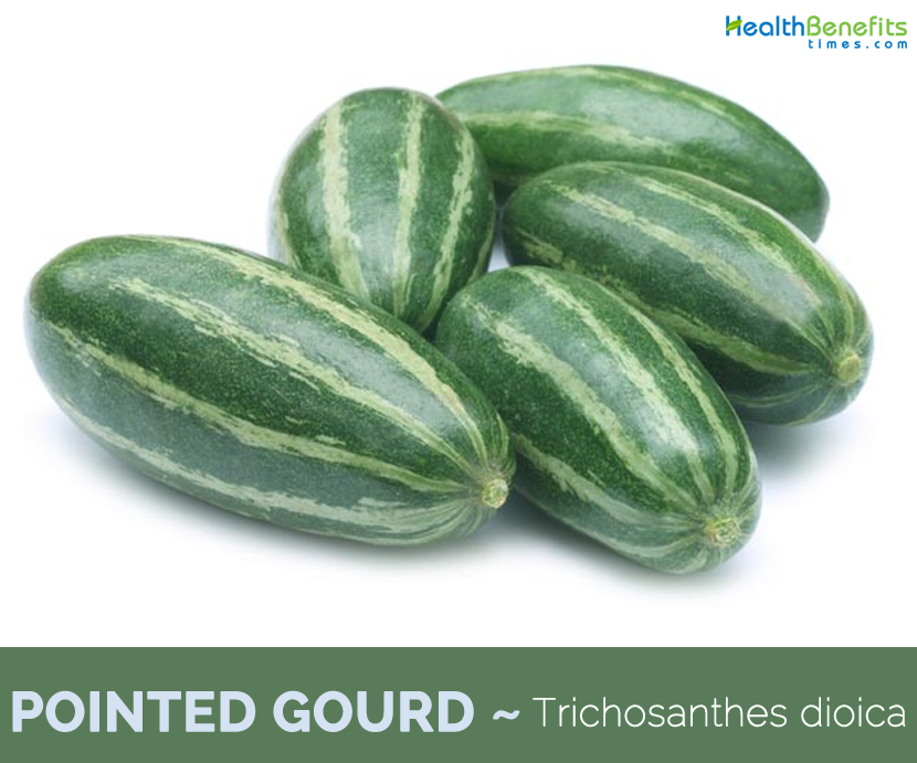 Health-benfits-of-Pointed-gourd