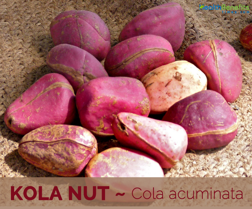 Kola nut Facts and Health Benefits