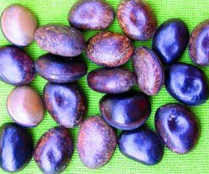 Health benefits of Velvet Bean