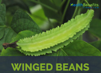 Winged bean facts and health benefits