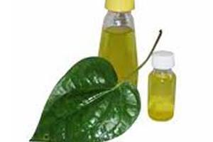 Health Benefits Of Betel Leaf Oil