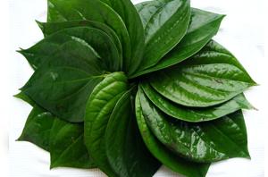Health Benefits of Betel Leaf