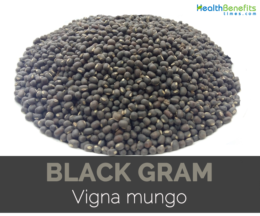 Black gram nutrition