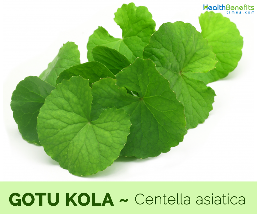 Health benefits of Gotu Kola
