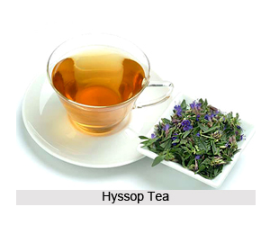 Health benefits of Hyssop Tea