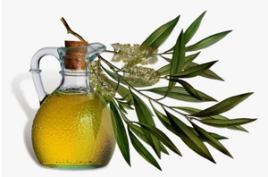 Health benefits of Tea Tree Oil