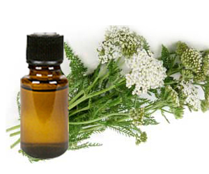 Health benefits of Yarrow Essential Oil