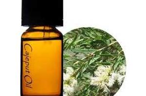 Health Benefits of Cajuput Essential Oil