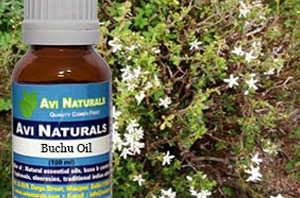 Health benefits of Buchu Essential Oil