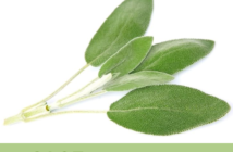 18 Health benefits of Sage