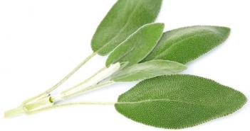 18 Health benefits of Sage